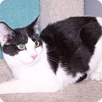 Adopt A Pet :: K-Emery6-Morgan - Colorado Springs, CO