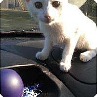 Adopt A Pet :: Rose - Mobile, AL
