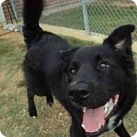 Adopt A Pet :: Colbalt - New Boston, NH