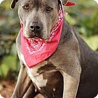 Adopt A Pet :: Gail - gentle, trained, @ LAAS - Los Angeles, CA