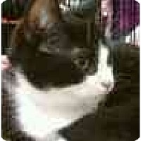 Adopt A Pet :: Maxwell - Manalapan, NJ