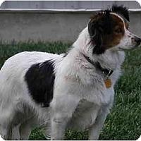 Adopt A Pet :: Geneva - Meridian, ID
