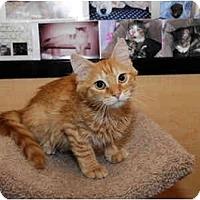 Adopt A Pet :: Pong - Farmingdale, NY