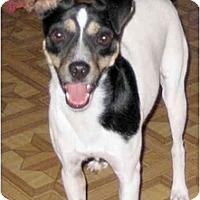 Adopt A Pet :: Sportster - Topeka, KS