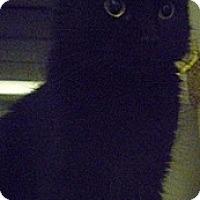 Adopt A Pet :: Eclair - Hamburg, NY