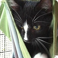 Adopt A Pet :: Twister - Shelby, NC