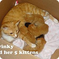 Adopt A Pet :: Twinky - Bentonville, AR