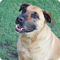 Adopt A Pet :: Lacy - Pinehurst, NC