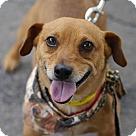 Adopt A Pet :: Bogey