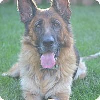 Adopt A Pet :: Shania - Rochester/Buffalo, NY