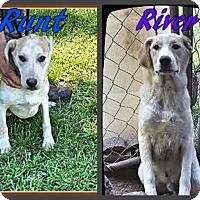 Adopt A Pet :: River & Runt - Ahoskie, NC