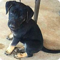 Adopt A Pet :: Magik - Henderson, NV