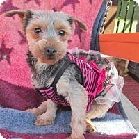 Adopt A Pet :: DANICA - WOODSFIELD, OH