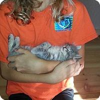 Adopt A Pet :: Carnival - Rocklin, CA