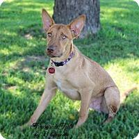 Adopt A Pet :: Jasper - Boyd, TX