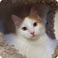 Adopt A Pet :: LaVerne - Grants Pass, OR