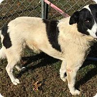 Adopt A Pet :: Hamlin - Sparta, NJ