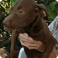 Adopt A Pet :: Chili - Sanford, FL