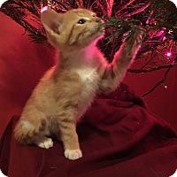Adopt A Pet :: Mr. Morris - Chicago, IL