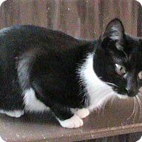 Adopt A Pet :: Lauren - Maynardville, TN