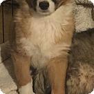 Adopt A Pet :: Laire
