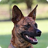 Adopt A Pet :: Bess - Orlando, FL
