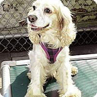 Adopt A Pet :: Janice - New York, NY