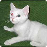 Adopt A Pet :: Toby - Richmond, VA
