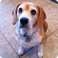 Adopt A Pet :: Elsa - Phoenix, AZ