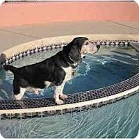 Adopt A Pet :: Niles - Phoenix, AZ