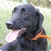 Adopt A Pet :: Tara - Cumming, GA