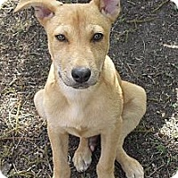 Adopt A Pet :: Dozer - Vista, CA
