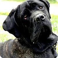 Adopt A Pet :: Guinness - Phoenix, AZ