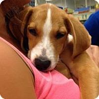 Adopt A Pet :: Universal - Gainesville, FL