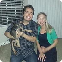 Adopt A Pet :: Hurley - Sacramento, CA