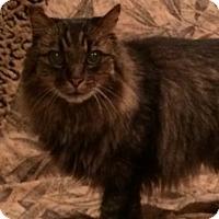 Adopt A Pet :: Kaleo - Laguna Woods, CA