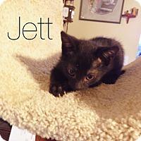Adopt A Pet :: Jett - Bentonville, AR