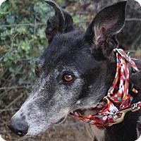 Adopt A Pet :: Jolene - Tucson, AZ