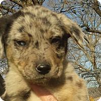Adopt A Pet :: Maddie AD 03-05-16 - Preston, CT