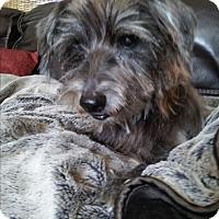 Adopt A Pet :: Arthur - Ocean Ridge, FL