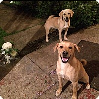 Adopt A Pet :: Maggie and lucy - mooresville, IN