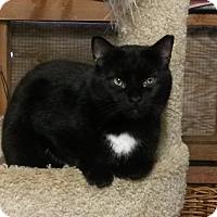 Adopt A Pet :: Solotaire - Trevose, PA