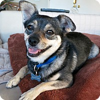 Adopt A Pet :: Phoebe - Fantastic Little Girl - Los Angeles, CA