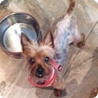 Adopt A Pet :: Sweet Sophie - N. Babylon, NY
