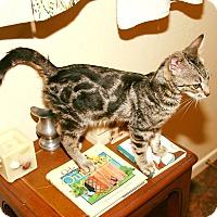 Adopt A Pet :: Valero - Rancho Cucamonga, CA