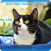 Adopt A Pet :: Mona Lisa - Waterbury, CT