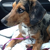 Adopt A Pet :: Sadie - Florence, KY