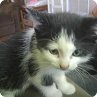 Adopt A Pet :: Elsa - Minneapolis, MN