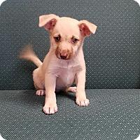 Adopt A Pet :: NAOMI - Gustine, CA