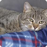 Adopt A Pet :: Kayla - Pensacola, FL
